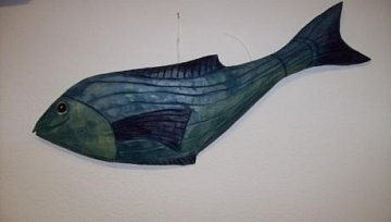 Ryba modrá - 1